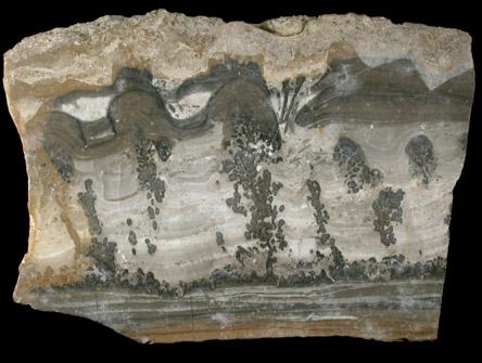 Photographs Of Mineral No 37295 Algal Limestone Var